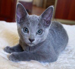 Tara O'Hara Perfect Cat Kaptown