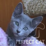 Evalina Perfect Cat