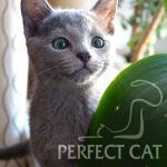 Agata Perfect Cat