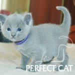 Feokl Perfect Cat