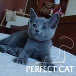 Helga Perfect Cat