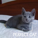 Hvorost Perfect Cat