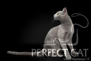 TIBERIUS PERFECTAT*RU
