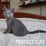 Paloma Perfect Cat