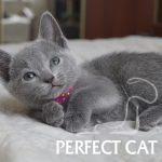 Pandora Perfect Cat