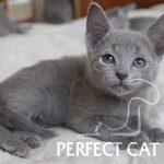 Parker Perfect Cat