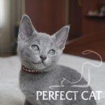Porter Perfect Cat