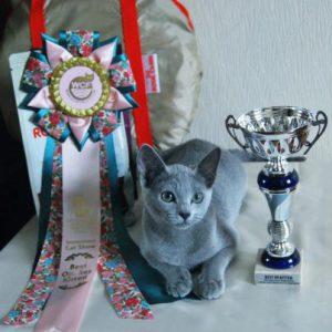 "Fuji Perfect Cat Kaptown на Международной выставке ""Сезон Русской кошки 2012"""