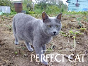 Don Quikhote Perfect Cat