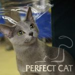 Fuji Perfect Cat Kaptown