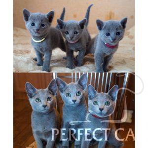 Bony Perfectat*RU, Beatrisa Perfectat*RU, Blanche Perfectat*RU