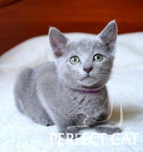 Abigail Perfectat*RU