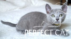 Anfisa Perfectat*RU
