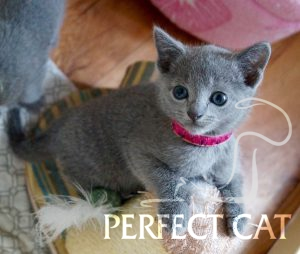 Enigma Perfect Cat