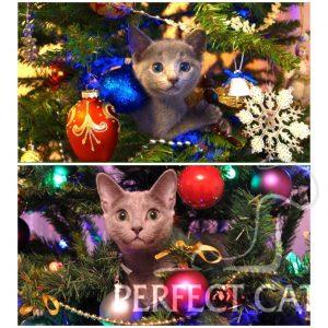 Assol Perfect Cat
