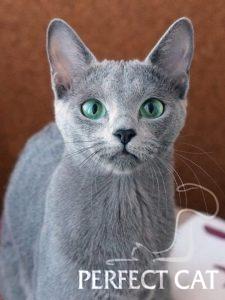 Agata Perfect Cat