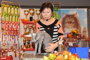 Международная выставка кошек «Кубок Dennis»