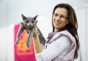 Мультисистемная выставка кошек «Содружество — Grand Prix Royal Canin»