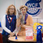 "Международная выставка кошек ""Кэт - Салон - Январь"""