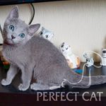 Perfect Cat Deima Pinega