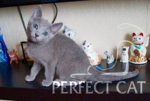 Perfect Cat Deima Pinega