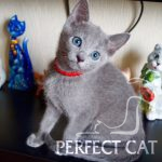Perfect Cat Demina Pinega