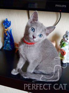Perfect Cat Demina Pinega