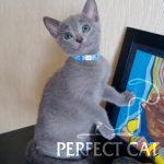 Perfect Cat Dubna Pinega