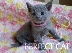 Frederica Perfectat*RU
