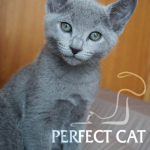 Ikarus Perfect Cat
