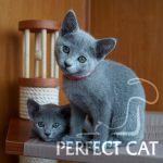 Infanta Perfect Cat