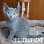 Ivetta Perfect Cat