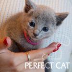 Perfect Cat Goncharova