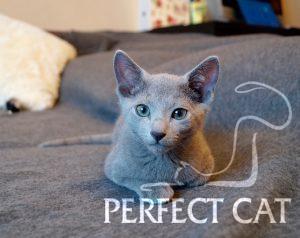 Hermione Perfectat*RU