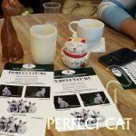 Котики и Люди
