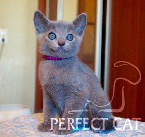 Samara Perfectcat