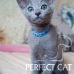 Samson Perfectcat