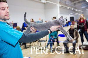 18-19 февраля 2017, Минск. Выставка кошек. FIFe.