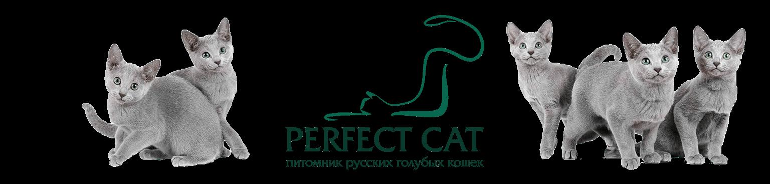 Питомник русских голубых кошек Perfect Cat