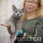 04-05 марта 2017 г. International Cat Show CATSBURG