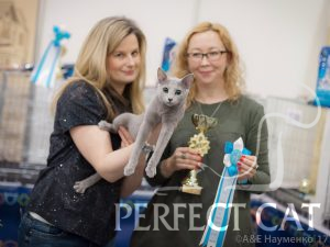 04-05 марта 2017 г. International Cat Show CATSBURG