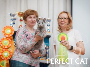 20-21 мая 2017 г. Выставка кошек в г. Кострома. WCF