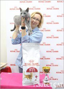 26-27 августа 2017. Выставка кошек в Москве. WCF