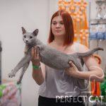 12-13 августа 2017. Выставка кошек в Москве. FIFe