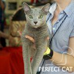 Выставка кошек в Нижнем Новгороде (FIFе)