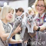 """16-17 сентября 2017. Выставка кошек в Москве """"Forrest"""". FIFe"""