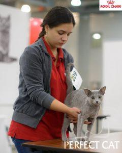 Мультисистемная выставка кошек Гран При Роял Канин. Москва