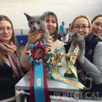 24-25 февраля 2018. Беларусь. Минск. Выставка кошек FIFe