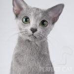 NW'17 CH Antonina Perfectat*RU, JW